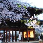樱花处处有,为何一定要去日本看