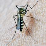终结疟疾的疫苗