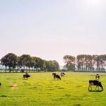 农场环境有助于治疗气喘