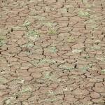 平衡全球暖化的两难