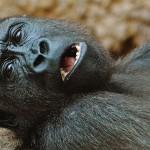动物园动物如何学习照顾自己