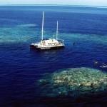 大堡礁,又一次的漂白危机
