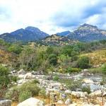加州红杉树国家公园参见全世界最大的树