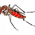 一只蚊子可能就传播多种病毒