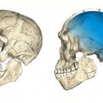 30万年前的头骨可以改写人类起源的故事