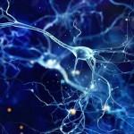 人工突触的发展将让人工智能更智能