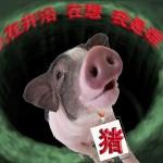 当只猪没什么不好