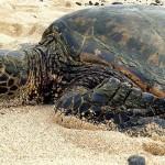 拯救战火下的海龟