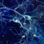 大脑能早于你识别到熟悉的图像