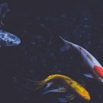 鱼也会忧郁