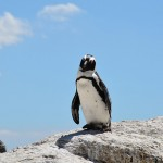 企鹅挨饿死亡南极出大问题