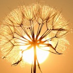 会有一些东西闻起来像阳光吗?