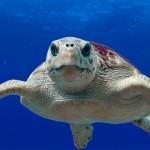 世界第一座认证的海龟医院