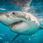 防鲨网危害海洋生物应淘汰