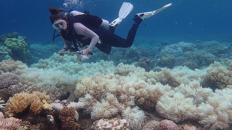 世界海洋污染数据图