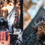 【美得像童话】超强野生动物摄影师,遇到他的动物都自动被催眠成模特儿了
