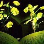 用[植物]取代[电灯]不是梦!