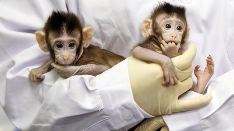第一次成功克隆猴子