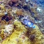 亚洲海域塑胶垃圾问题严重