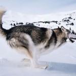 你的狗准备好当明星了吗?
