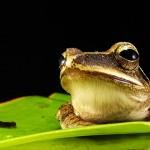 你的旅行青蛙会算数吗?还是只会寄明信片?