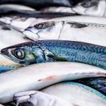 常吃鱼身体累积太多甲基汞、有机锡,恐不利怀孩子
