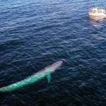 鲸鱼为什么这么大?