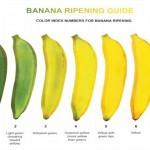 香蕉颜色决定风味与保健作用