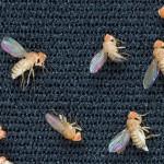 为什么果蝇是太空中的第一种动物?