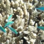 澳洲花三亿美元修复大堡礁