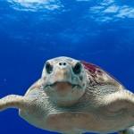 欧洲网站濒危动物买卖猖獗