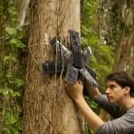 非营利组织使用旧手机拯救热带雨林