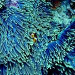 新喀里多尼亚扩大珊瑚保护区