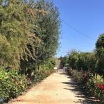 加州Fresno的地下花园