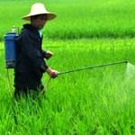 真菌杀虫剂可能是未来的绿色解决方案
