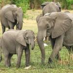 越南推广零伤害友善大象之旅