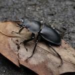 热浪摧毁了雄性昆虫生殖力