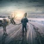挪威北方的养鹿人捍卫传统