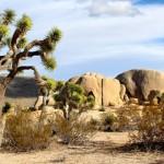 美国家公园因停摆需300年恢复