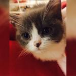 养一只猫咪,你离这个梦想还有多远?