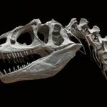 拒绝恐龙化石拍卖收藏行为