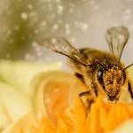 蜜蜂的聪明行为