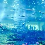 世界最大海底餐厅即将完工