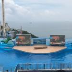 香港海洋公园可以这么玩