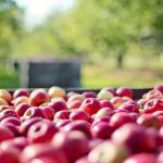 农业文化产业发展契机