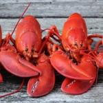 为什么煮熟后的龙虾会变红?