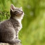 猫咪懂自己的名字