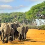 全球濒临灭绝的物种