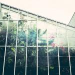 为何千禧生著迷于室内植栽?