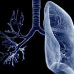 肺部也是脂肪储存所